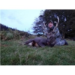 5-day Ireland Free-ranging Sika Deer and Soay Sheep Hunt for One Hunter and One Observer