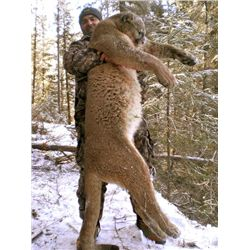 6-day British Columbia Mountain Lion Hunt for Two Hunters