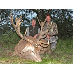 5-day Argentina Red Deer and Dove Hunt for One Hunter and One Observer