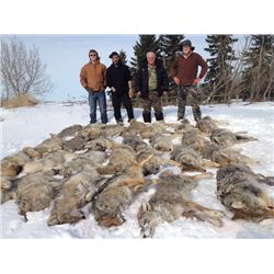 5-day Alberta Coyote Hunt for Four Hunters