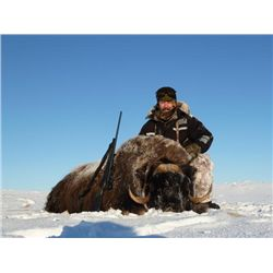 4-day Greenland Muskox Hunt in Nunavut for One Hunter