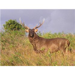 5-day Australia Sambar Deer Hunt for One Hunter and One Observer