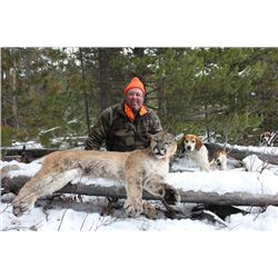 7-day Wyoming Mountain Lion and Bobcat Hunt for One Hunter