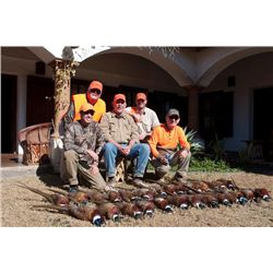 3-day Mexico Wild Pheasant Hunt for Four Hunters