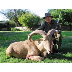 5-day Texas Best Available Aoudad Hunt for One Hunter