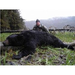 7-day Alaskan Black Bear Hunt for One Hunter