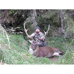 5-day New Zealand Sambar and Sika Deer Hunt for Two Hunters