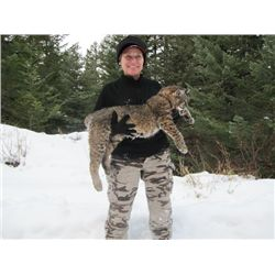 7-day British Columbia Lynx, Bobcat, Coyote and Wolf Hunt for One Hunter