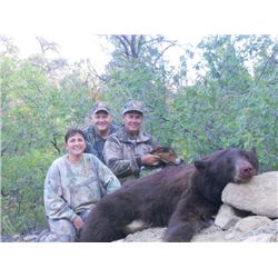 8-day New Mexico Rocky Mountain Elk and Black Bear Combo Hunt for One Hunter