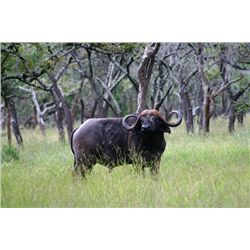 10-day Tanzania Cape Buffalo and Plains Game Hunt for One Hunter and One Observer