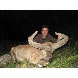 5-day Azerbaijan hunt for Dagestan (Eastern) Tur for one hunter