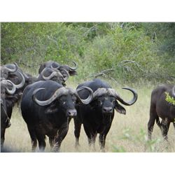 14-day Namibian Non-trophy Elephant, Buffalo and Plains Game Hunt for One Hunter and One Observer wi