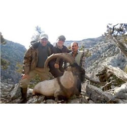 10-day Turkey Bezoar Ibex Hunt for One Hunter and One Observer
