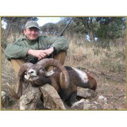 5-day Spain Mouflon, Fallow Deer, Red Deer and Eurasian Boar Hunt for Four Hunters