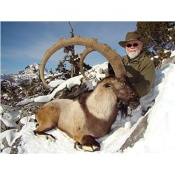 7-day Turkey Bezoar Ibex Hunt for One Hunter and One Observer
