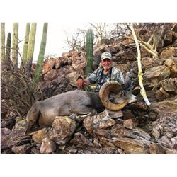 14-day Mexico Trophy Desert Bighorn Sheep Hunt for One Hunter and One Observer