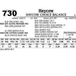 Lot 730 - HAYCOW GRADUATE 310 - Haycow
