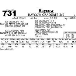 Lot 731 - HAYCOW SHORTIE 313 - Haycow