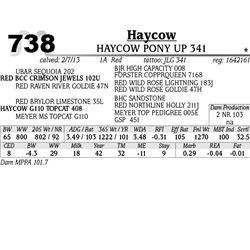 Lot 738 - HAYCOW JET 351 - MJB Ranch