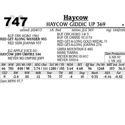 Lot 747 - HOYCOW KNOCK OUT 382 - MJB Ranch
