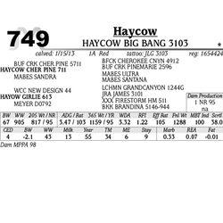Lot 749 - HAYCOW CHOICE 3170 - MJB Ranch