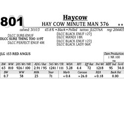 Lot 801 - HAY COW MINUTE MAN 376 - MJB Ranch