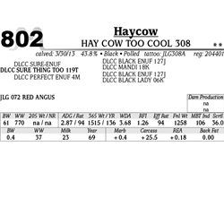 Lot 802 - HAY COW TOO COOL 308 - MJB Ranch