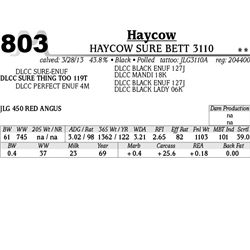 Lot 803 - HAYCOW SURE BETT 3110 - MJB Ranch