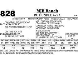Lot 828 - BC DUNDEE 422A - MJB Ranch