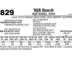 Lot 829 - MJB REBEL 309A - MJB Ranch