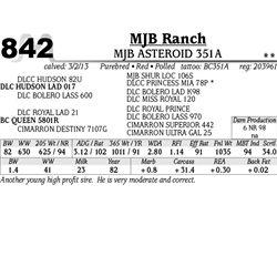 Lot 842 - MJB ASTEROID 351A - MJB Ranch