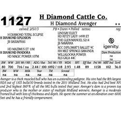 Lot 1127 - H Diamond Avenger - H Diamond Cattle Co.