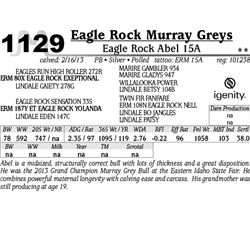 Lot 1129 - Eagle Rock Abel 15A - Eagle Rock Murray Greys