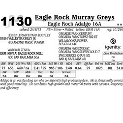 Lot 1130 - Eagle Rock Adalgo 16A - Eagle Rock Murray Greys