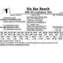 Lot 1 - SBR Mr Confident 304 - Six Bar Ranch