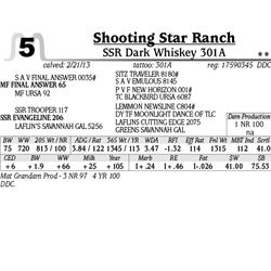 Lot 5 - SSR Dark Whiskey 301A - Shooting Star Ranch