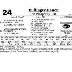 Lot 24 - BR Prosperity 328 - Bullinger Ranch