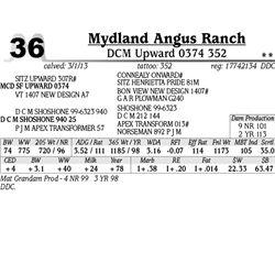 Lot 36 - DCM Upward 0374 352 - Mydland Angus Ranch