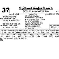 Lot 37 - DCM Upward 0374 346 - Mydland Angus Ranch