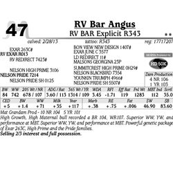 Lot 47 - RV BAR Explicit R343 - RV Bar Angus
