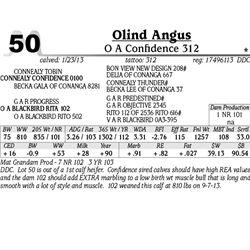 Lot 50 - O A Confidence 312 - Olind Angus