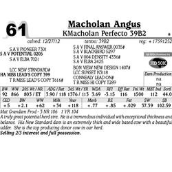 Lot 61 - KMacholan Perfecto 39B2 - Macholan Angus