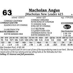 Lot 63 - JMacholan New Leader 623 - Macholan Angus