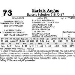 Lot 73 - Bartels Solution 318 X417 - Bartels Angus