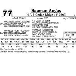 Lot 77 - H A F Cedar Ridge 1V 2603 - Hauman Angus