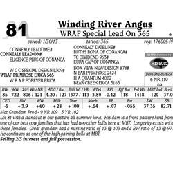 Lot 81 - WRAF Special Lead On 365 - Winding River Angus