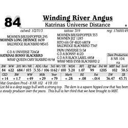 Lot 84 - Katrinas Universe Distance - Winding River Angus