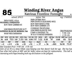 Lot 85 - Katrinas Frontline Foresight - Winding River Angus