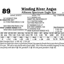 Lot 89 - Allisons Spectrum Eagle Eye - Winding River Angus