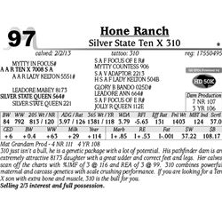 Lot 97 - Silver State Ten X 310 - Hone Ranch